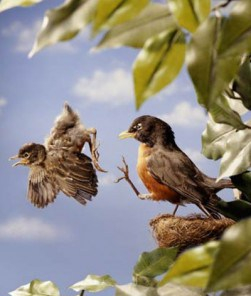baby-bird-learning-to-fly1-251x300.jpg